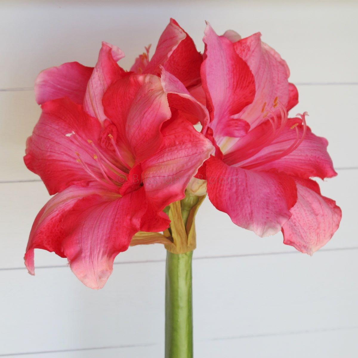 Very large pink amaryllis stem x 1 bliss and bloom ltd for Amarilis decoration