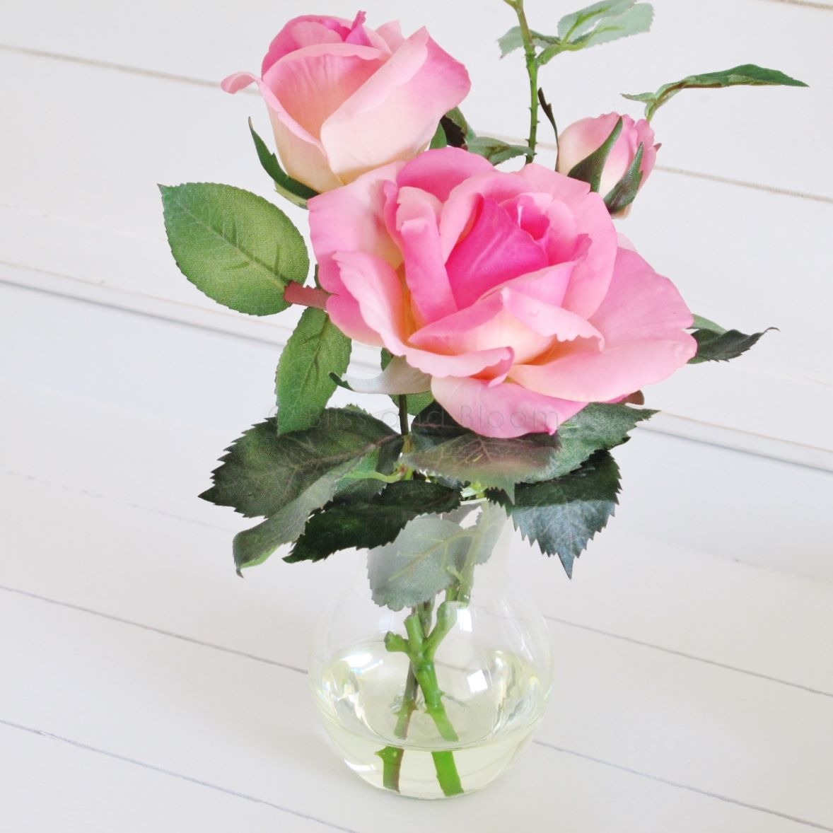 Pink Double Roses With Bud Bliss And Bloom